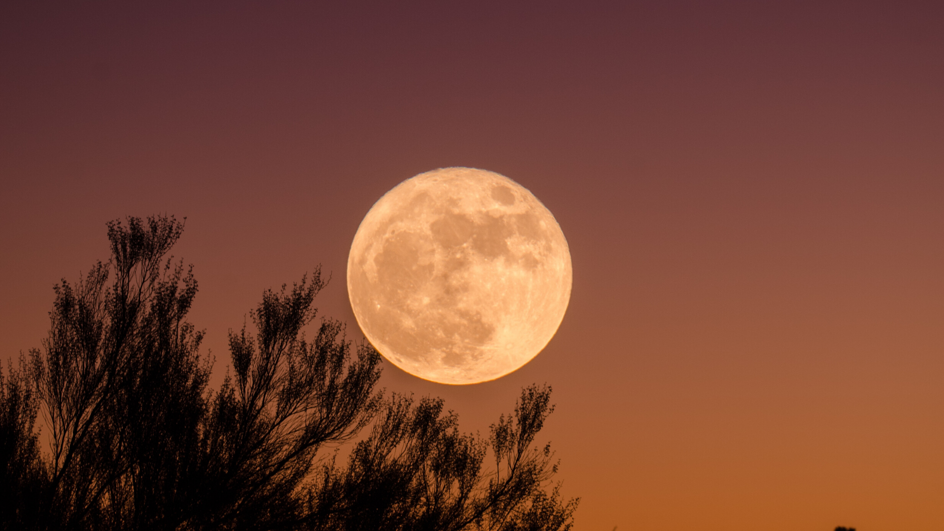 new and full moon dates 2020